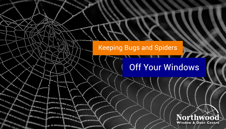 Keeping Bugs and Spiders Off Your Windows